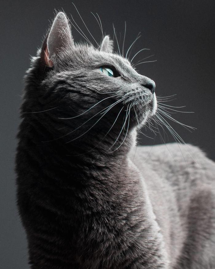 cat babysitter friend photoshoot 2 5d0348edd74ec  700 - Вот что бывает, когда на время оставляешь свою кошку у друга-фотографа