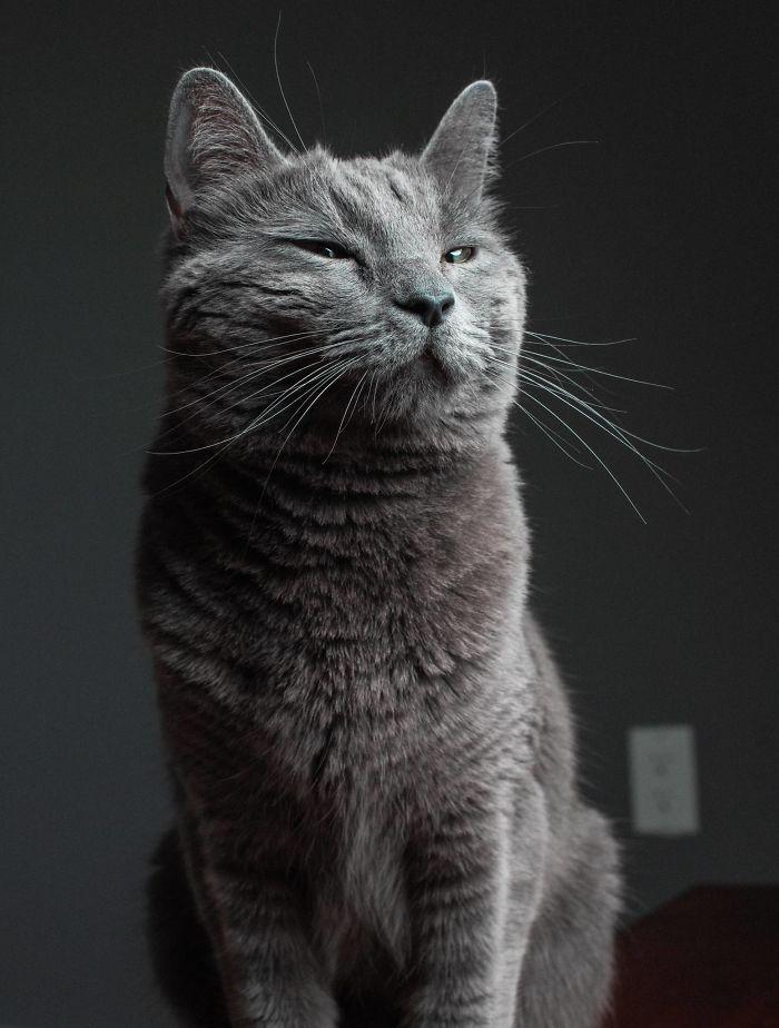 cat babysitter friend photoshoot 4 5d0348f343987  700 - Вот что бывает, когда на время оставляешь свою кошку у друга-фотографа