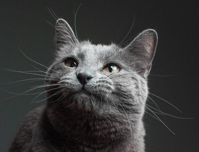 cat babysitter friend photoshoot 5 5d0348f5d000b  700 - Вот что бывает, когда на время оставляешь свою кошку у друга-фотографа