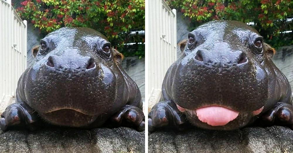 17 фотографий бегемотиков, которые влюбляют в себя с первой складочки