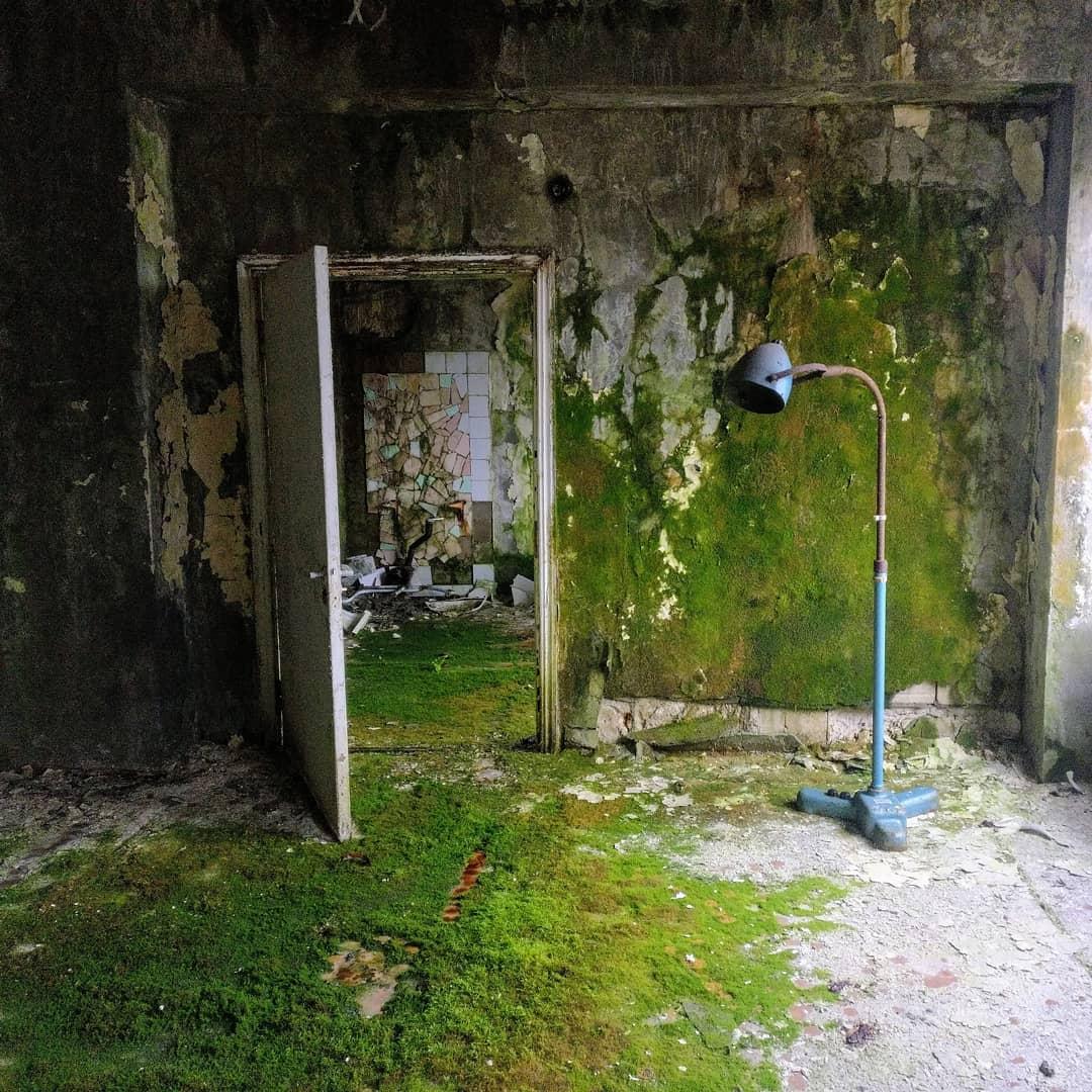 charlie tango chernobyl 64731358 452372038911057 6532583385609388493 n - 20 фотографий из Чернобыля, которые показывают, как природа восстанавливает заражённую землю