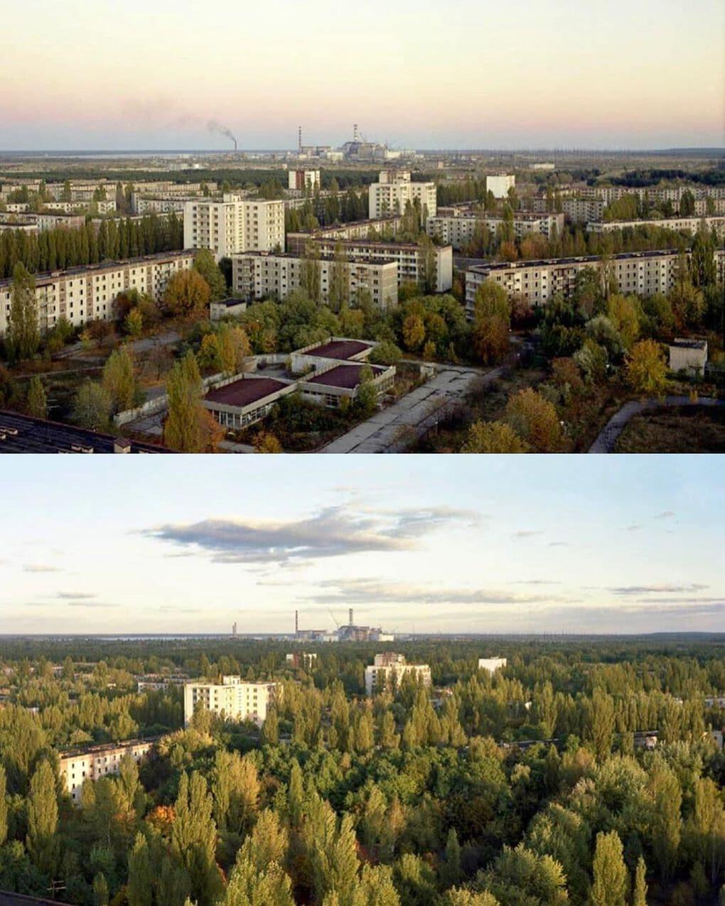 chernobyltvshow 64214853 698976093877128 6187016888451621770 n 1 - 20 фотографий из Чернобыля, которые показывают, как природа восстанавливает заражённую землю