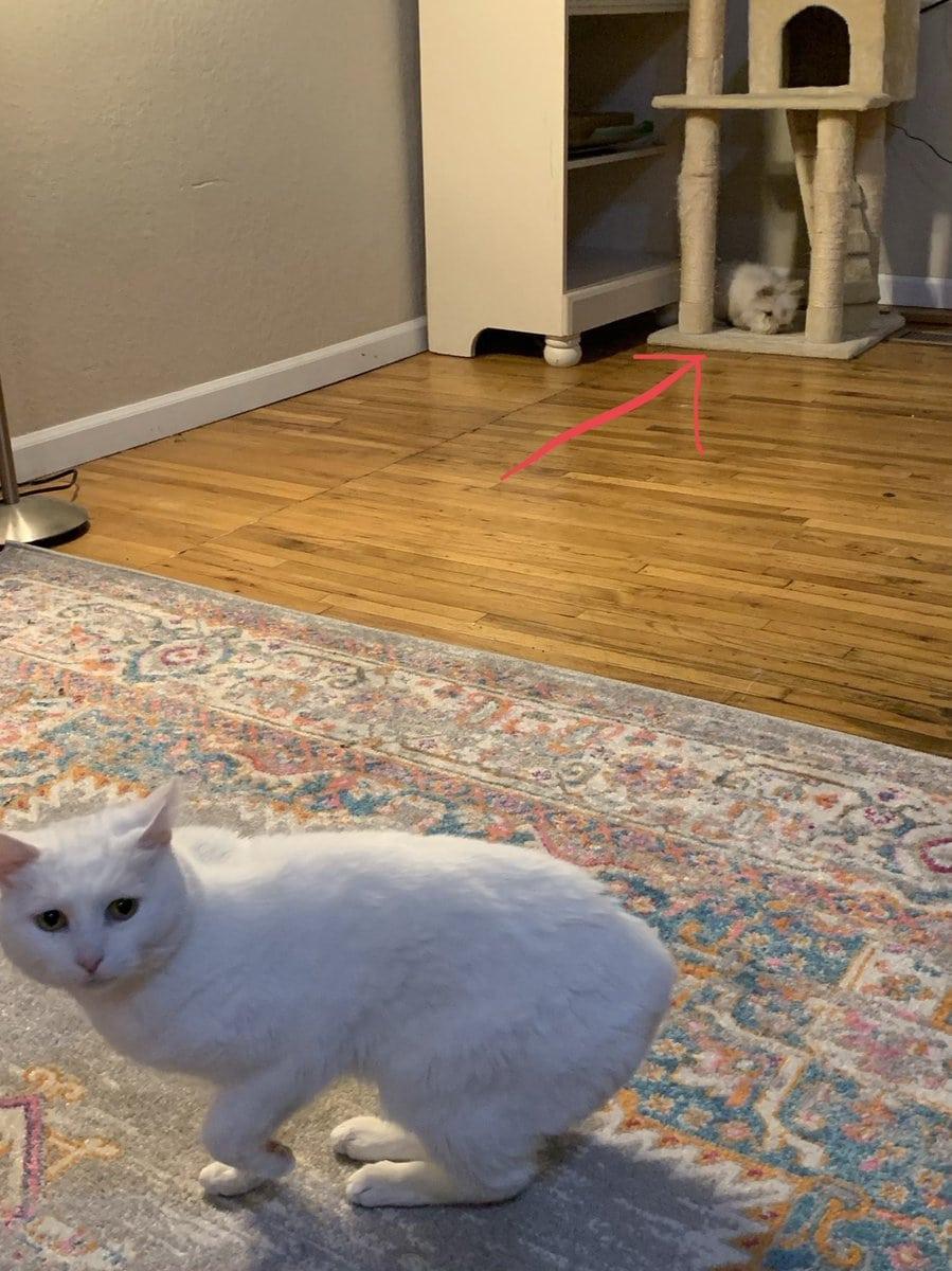 dzmqm4qu0ayiyh  - 17 случаев, когда люди использовали свою фотокамеру во имя самого святого — котов