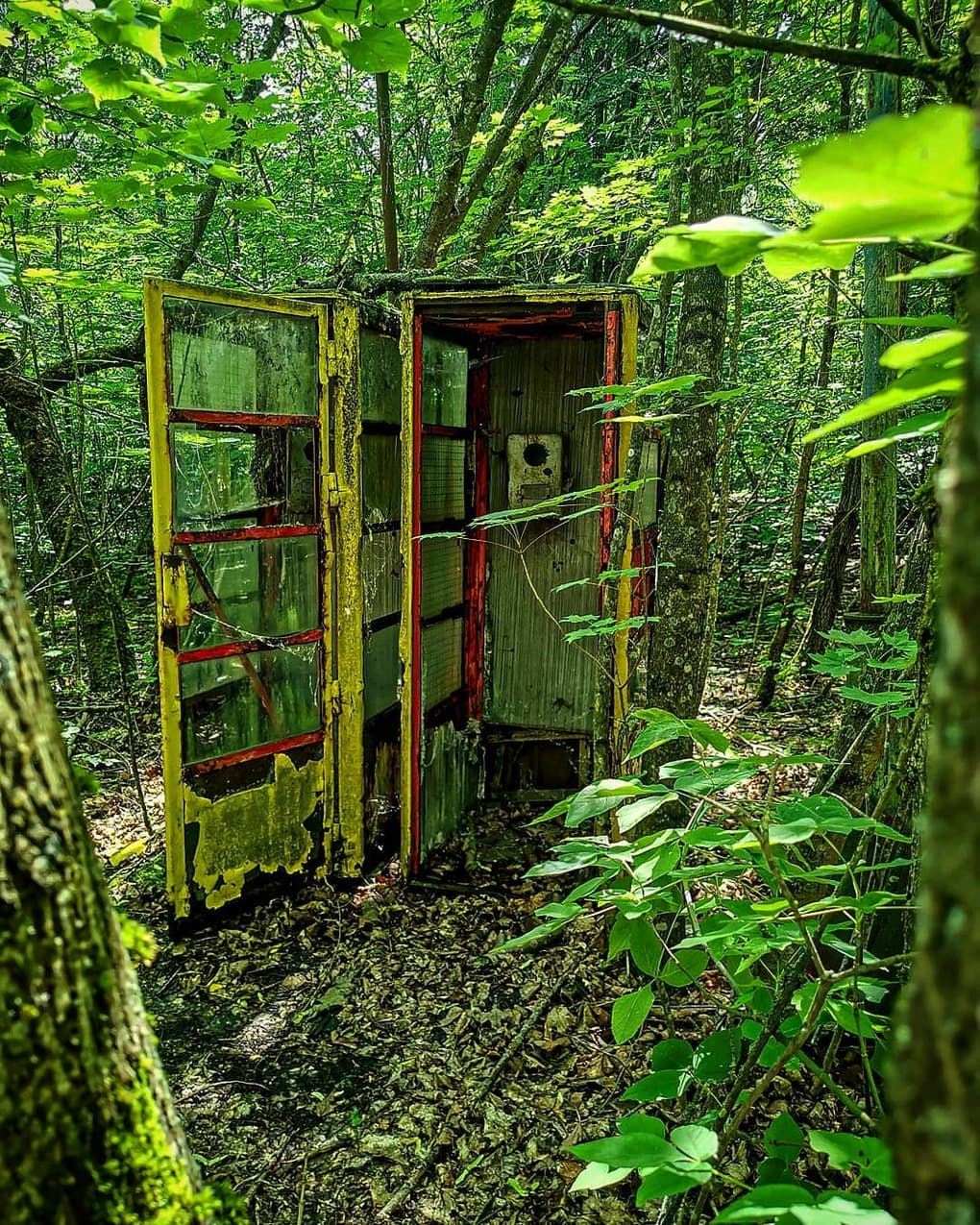 essextoeverywhere 64258820 120273712545743 6207068175864725152 n - 20 фотографий из Чернобыля, которые показывают, как природа восстанавливает заражённую землю