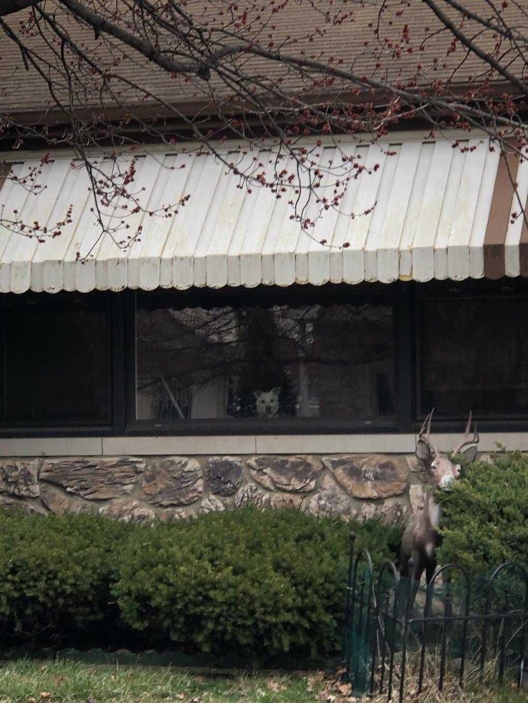 evg3f0y - Мужчина поделился трогательными фото своего пса, который каждый день ждал его у окна. Целых 11 лет