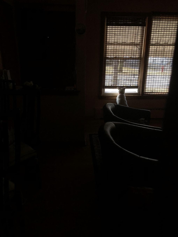 gzdx0hh - Мужчина поделился трогательными фото своего пса, который каждый день ждал его у окна. Целых 11 лет
