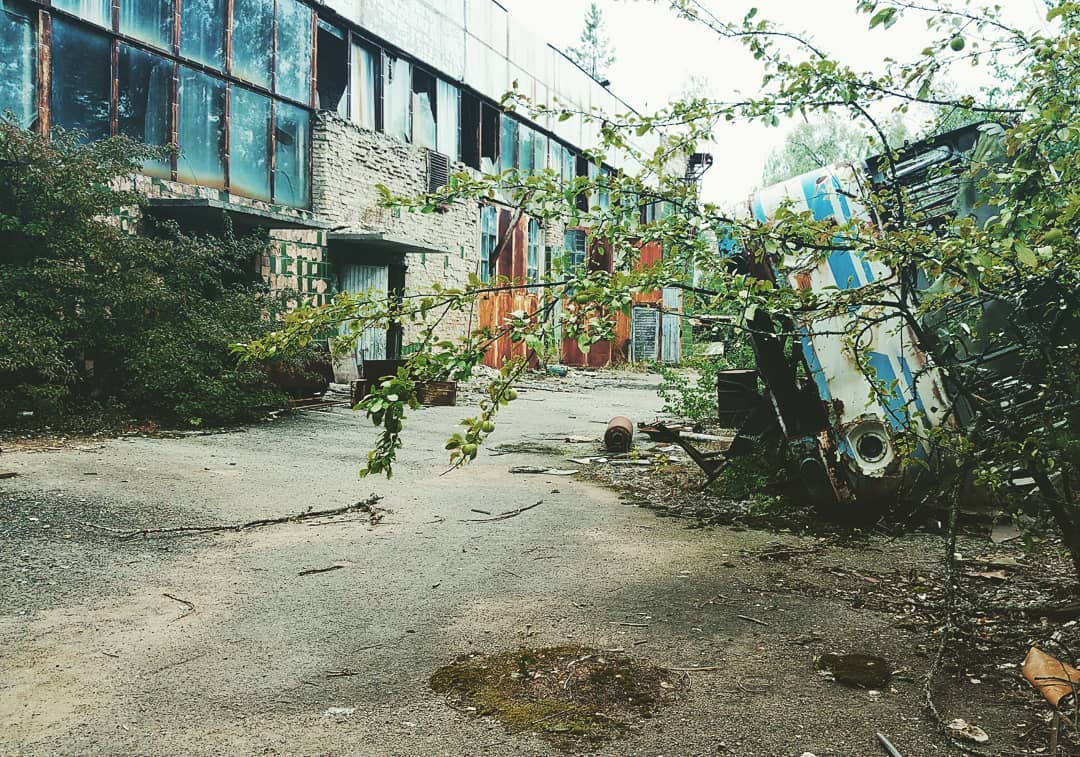 heyhey 86 62485078 470807107067292 266340953377127007 n - 20 фотографий из Чернобыля, которые показывают, как природа восстанавливает заражённую землю