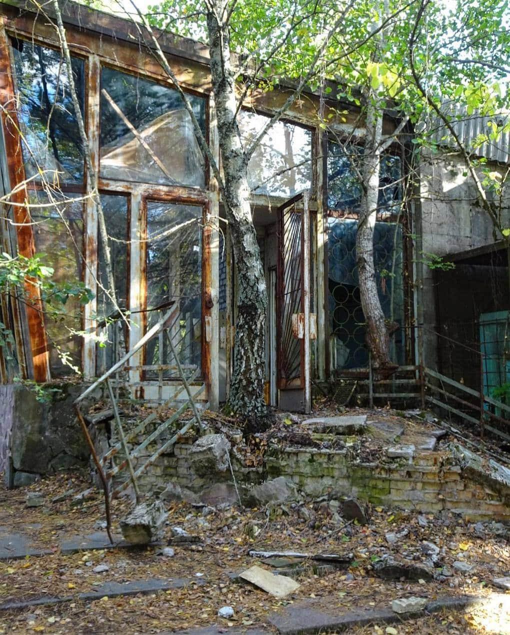 hiperposteador 64557785 468331730408930 8819642397612017927 n - 20 фотографий из Чернобыля, которые показывают, как природа восстанавливает заражённую землю