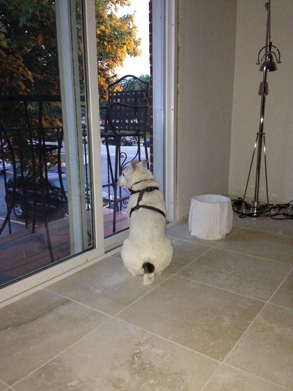 j9xv4oh - Мужчина поделился трогательными фото своего пса, который каждый день ждал его у окна. Целых 11 лет