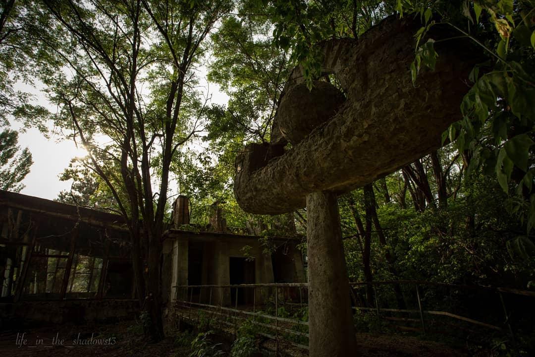 life in the shadows13 65266013 328077748143523 4413403789568913362 n - 20 фотографий из Чернобыля, которые показывают, как природа восстанавливает заражённую землю
