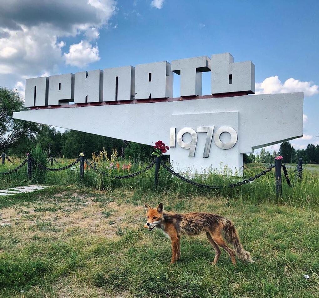 m olegovna 64310469 145788859925514 5620286115539283638 n - 20 фотографий из Чернобыля, которые показывают, как природа восстанавливает заражённую землю
