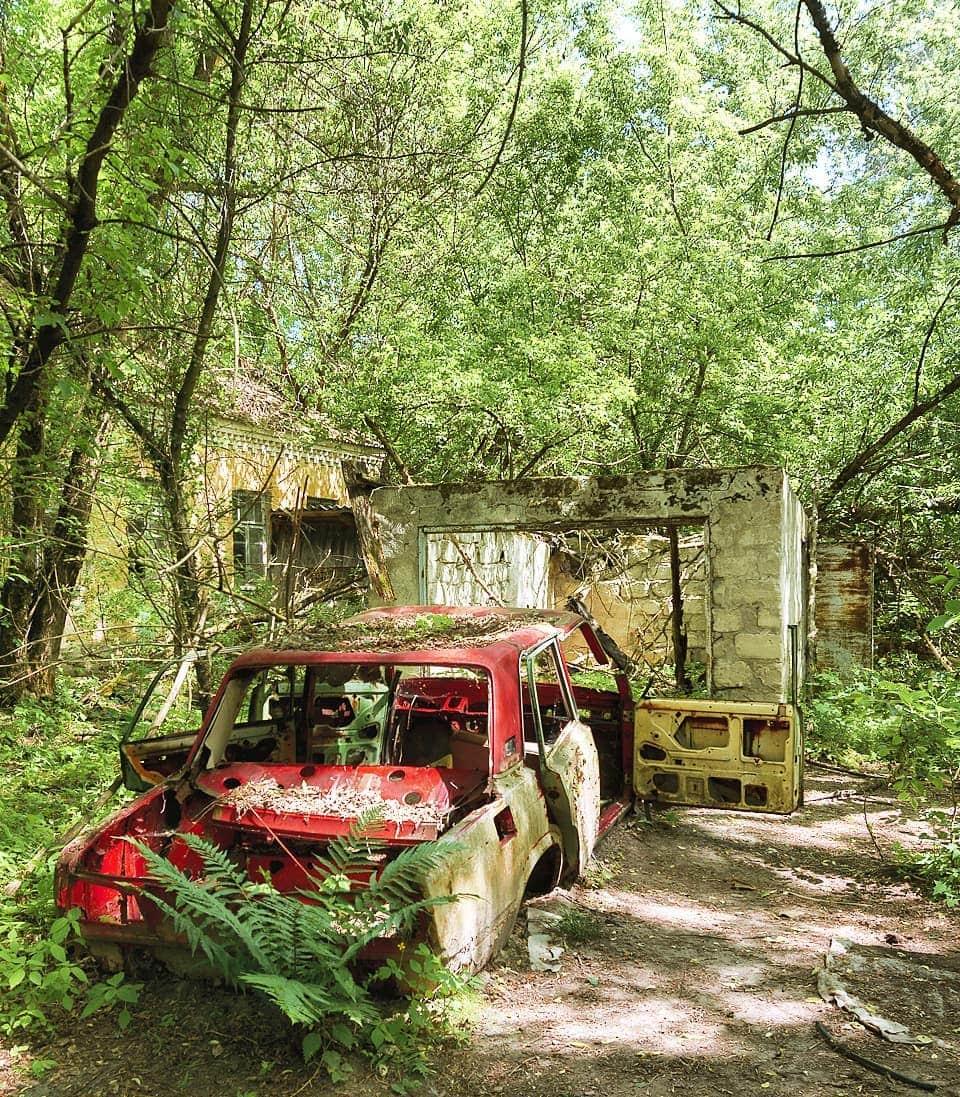 maloneone 64330483 1122841257919353 7707692173599404124 n - 20 фотографий из Чернобыля, которые показывают, как природа восстанавливает заражённую землю