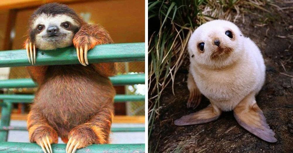 20 детёнышей животных, которые очаруют кого угодно