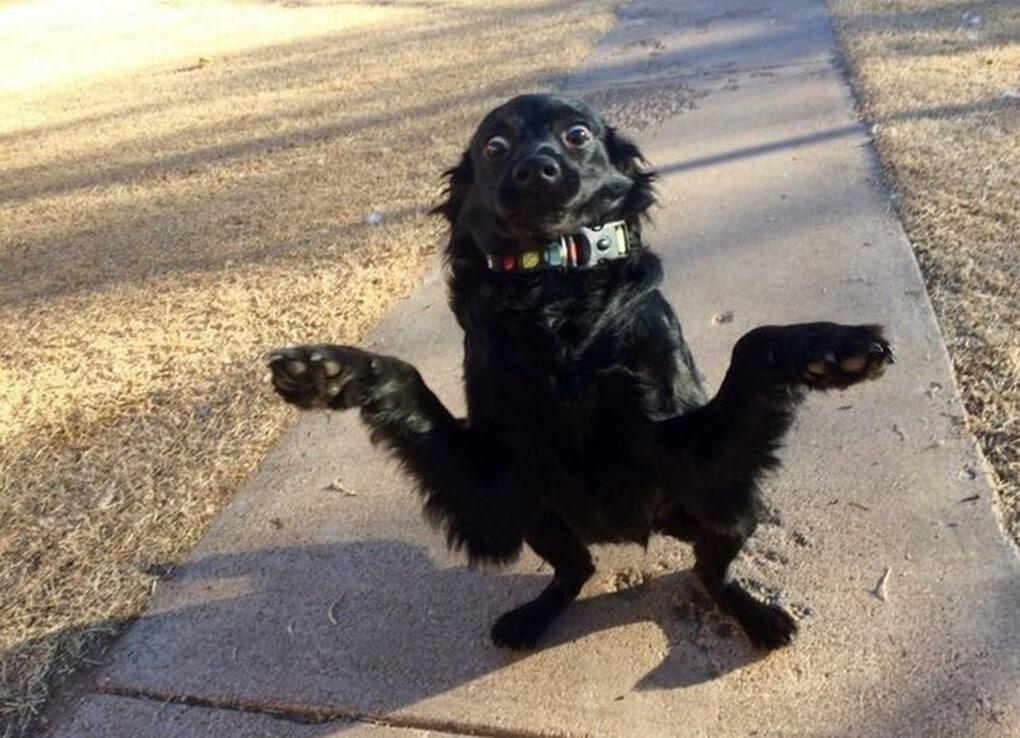 ob 42781b galerie images droles insolites et s - 17 котов и собак, которые не слишком удачно получились на фото (мягко говоря)