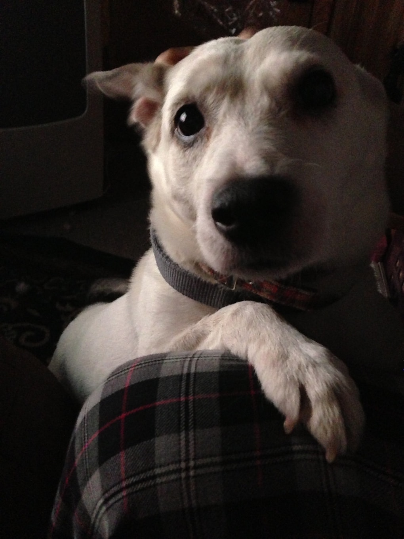 pddqrut - Мужчина поделился трогательными фото своего пса, который каждый день ждал его у окна. Целых 11 лет