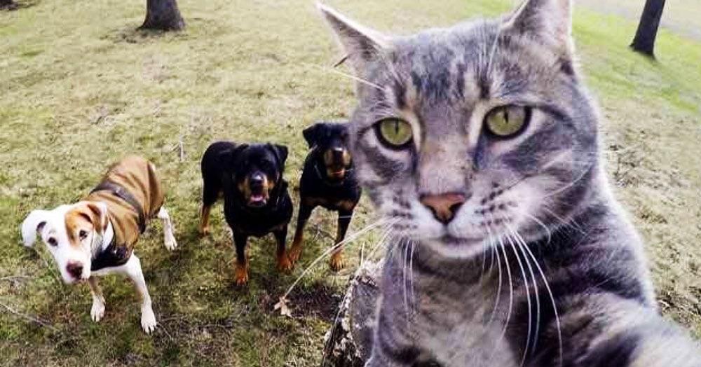 Учёные повесили камеры на ошейники кошек и выяснили, как ведут себя пушистые, когда рядом нет людей