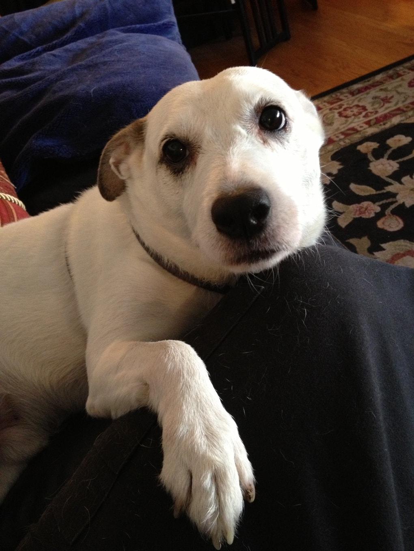 u4iyftn - Мужчина поделился трогательными фото своего пса, который каждый день ждал его у окна. Целых 11 лет