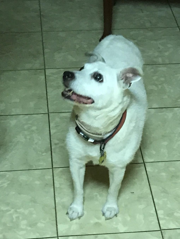 ui3egne - Мужчина поделился трогательными фото своего пса, который каждый день ждал его у окна. Целых 11 лет