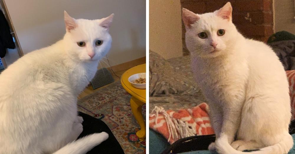 Девушка показала свою кошку, и та стала мемом. Потому что эта киса — тоска и грусть в кошачьей шкуре