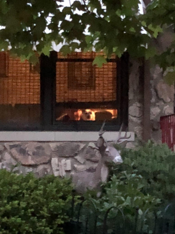 x8sdn3l 1 - Мужчина поделился трогательными фото своего пса, который каждый день ждал его у окна. Целых 11 лет