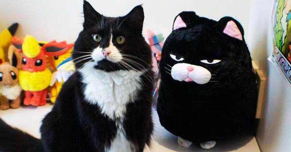 Хозяйка принесла коту его плюшевую копию. Сначала он был в шоке, но потом его сердечко растаяло