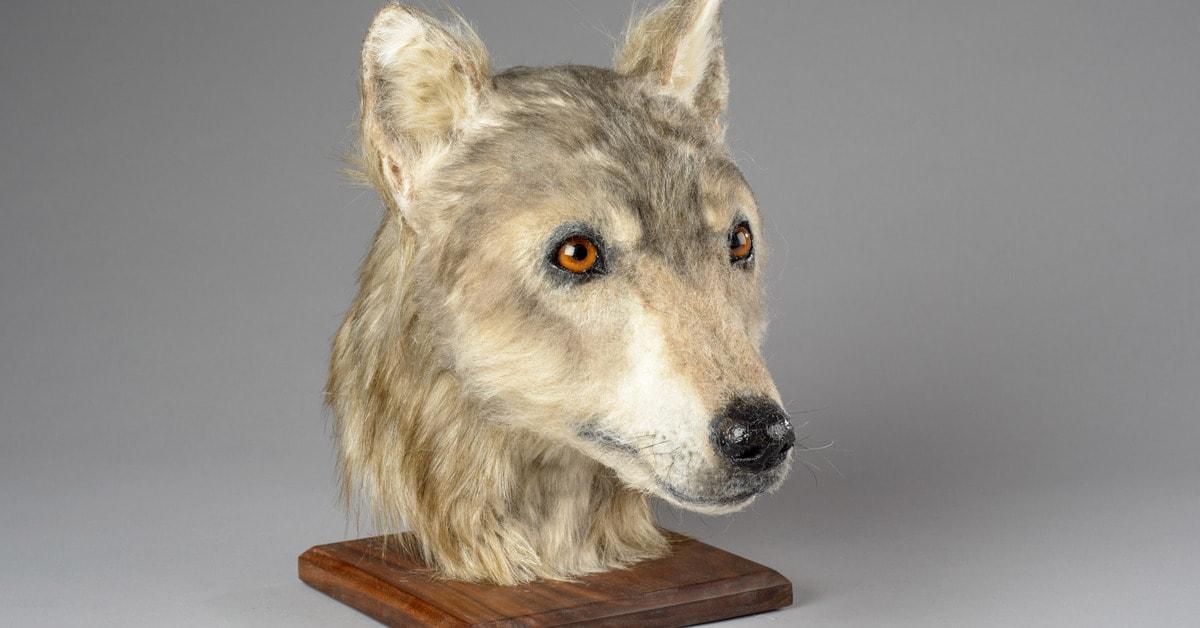 Шотландские учёные воссоздали облик собаки, которая жила на Земле 4000 лет назад