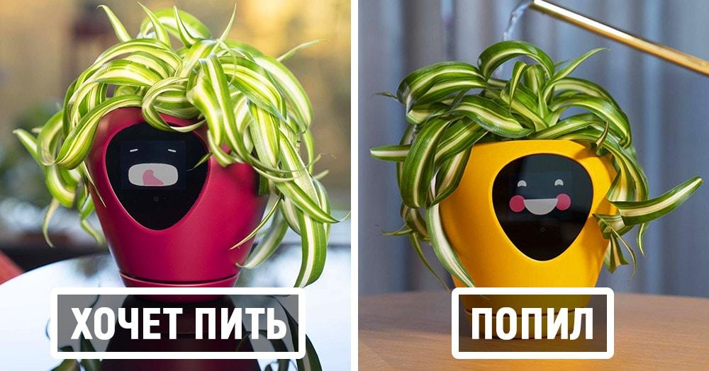 Этот умный цветочный горшок превратит ваши растения в тамагочи. Теперь убить их будет не так просто