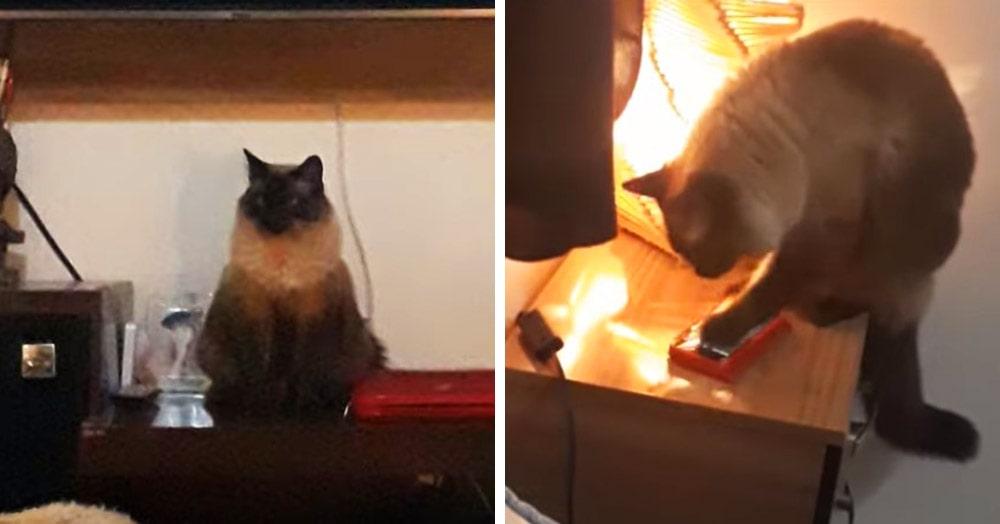 Бразильянки постоянно просыпали работу, потому что их котик умеет пользоваться айфоном