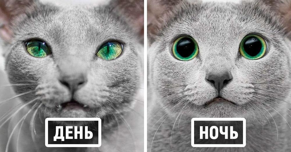 Природа наградила этих двух кошек изумрудными глазами, а они этим пользуются и покоряют всех вокруг