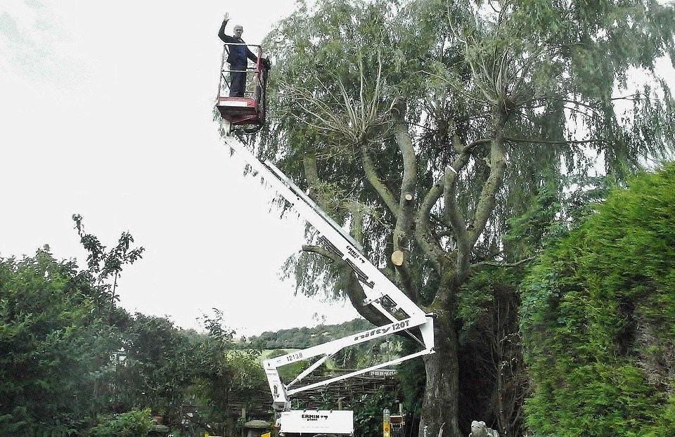 15764912 7223977 here mr meredith is seen cutting the tree back to make way from  a 27 1562578227636 1 - Британец хотел спилить дерево, но вид оттуда оказался так хорош, что он построил на нём домик