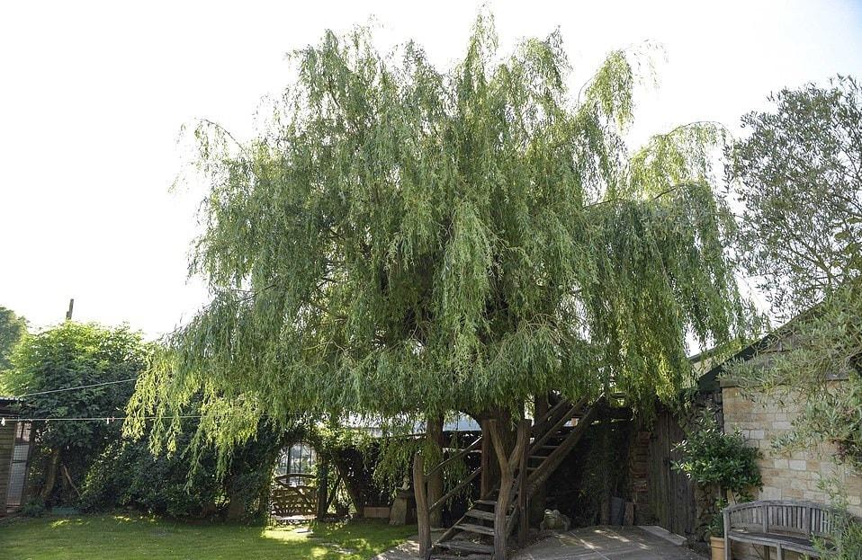 15764916 7223977 the tree house is almost invisible from the ground with only the a 29 1562578227654 - Британец хотел спилить дерево, но вид оттуда оказался так хорош, что он построил на нём домик