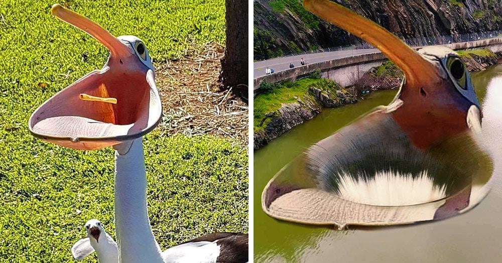 В сети делают фотопародии на пеликана, который так разинул свой клюв, что чуть не поглотил весь мир