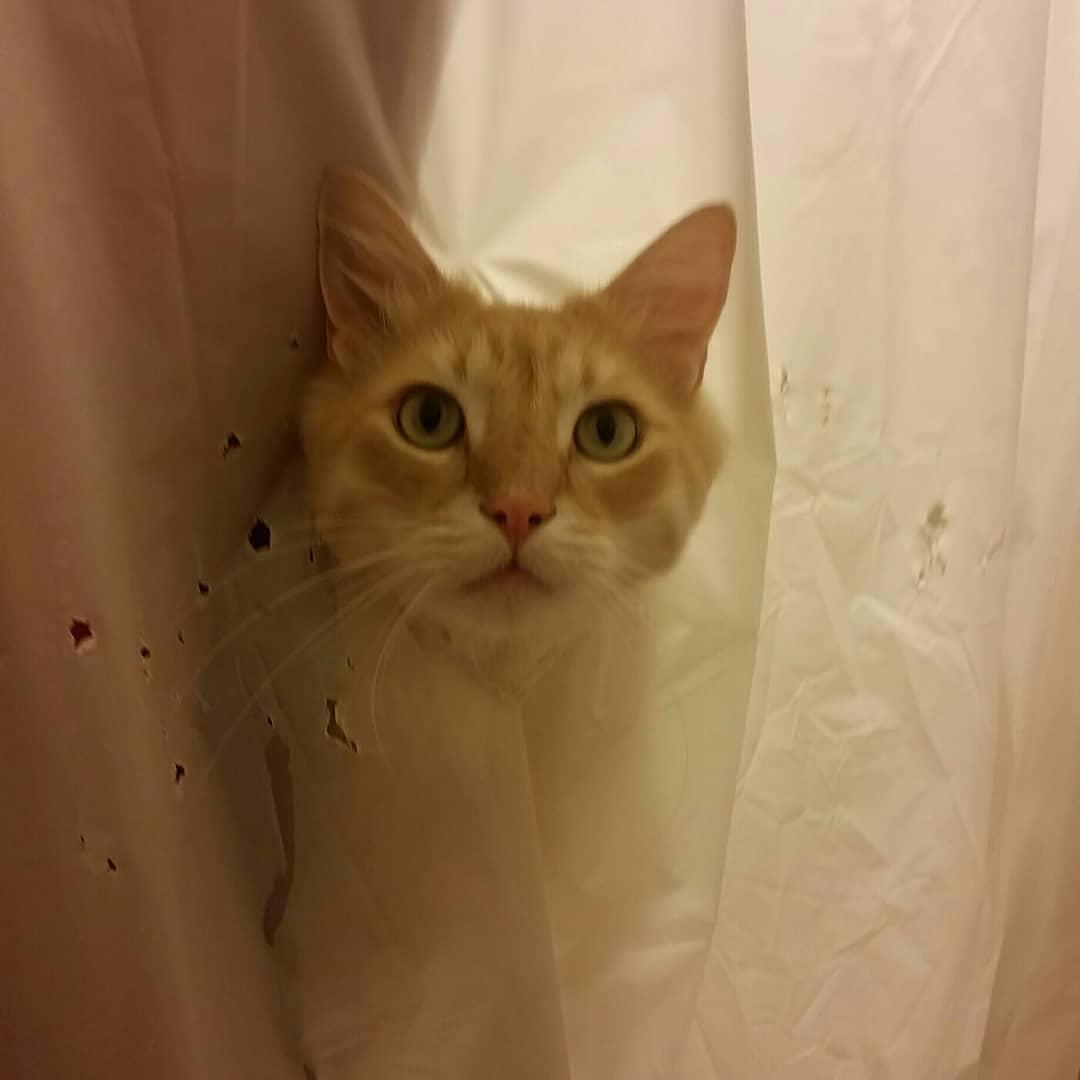 38097404 1080025382164328 8980073388055724032 n - Кот рвал шторки в ванной, и хозяйка решила это исправить — она начала дополнять дырки рисунками