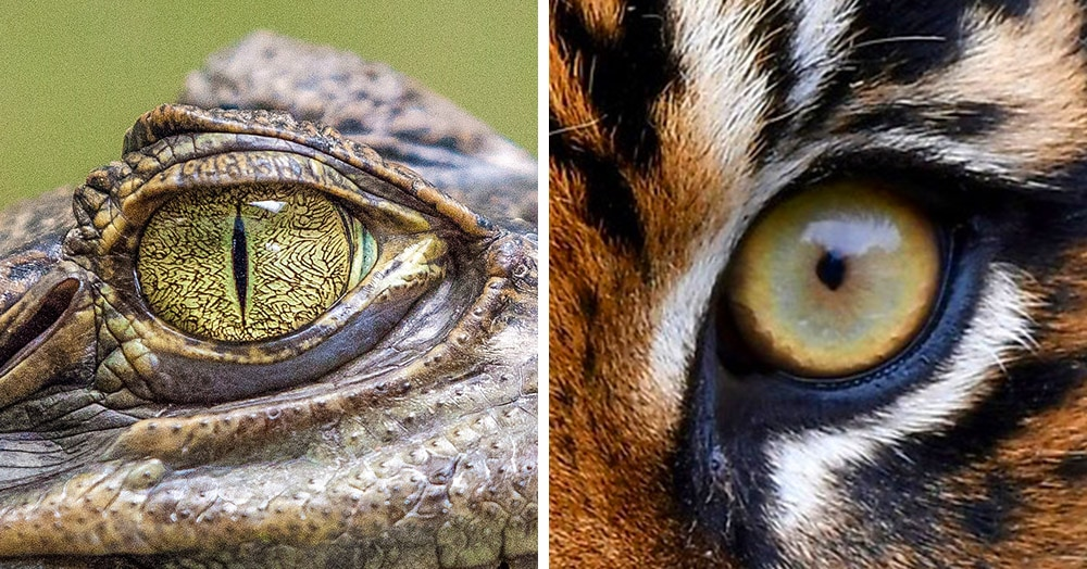Тест: Угадайте животное по глазам