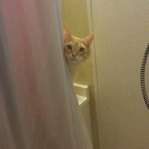 58926231 332906134037389 5474035858321743305 n - Кот рвал шторки в ванной, и хозяйка решила это исправить — она начала дополнять дырки рисунками