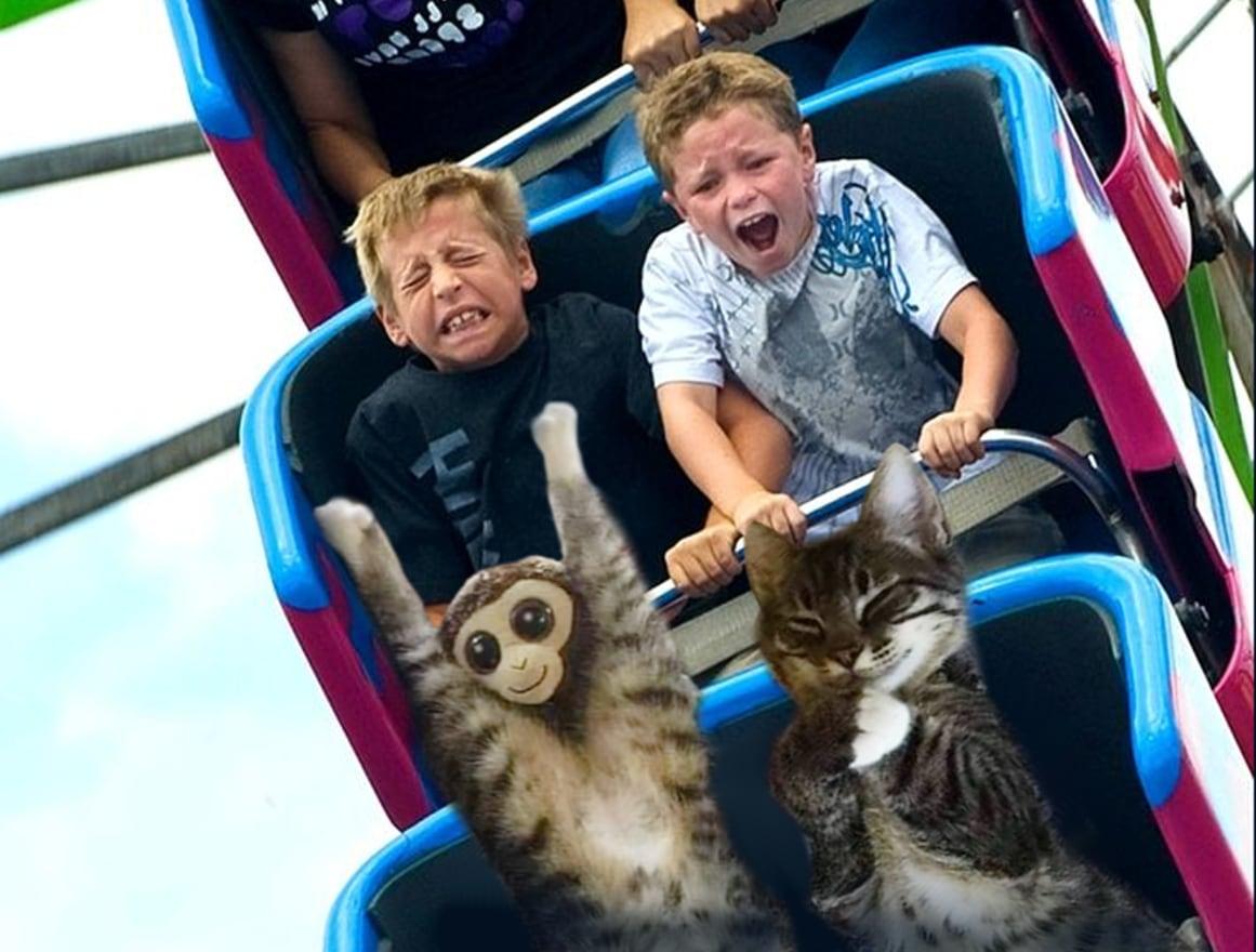 5pdnmnd - У растянувшегося котика в неожиданном месте образовалась обезьянка. Фотошоп-веселья было не избежать