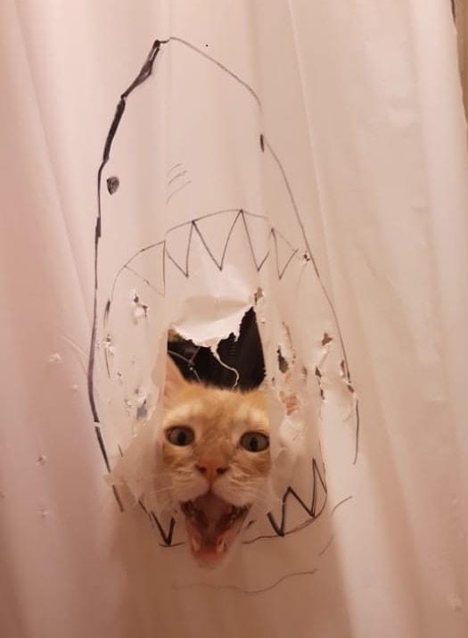 61064012 674883559615190 9169675219399874707 n 1 - Кот рвал шторки в ванной, и хозяйка решила это исправить — она начала дополнять дырки рисунками