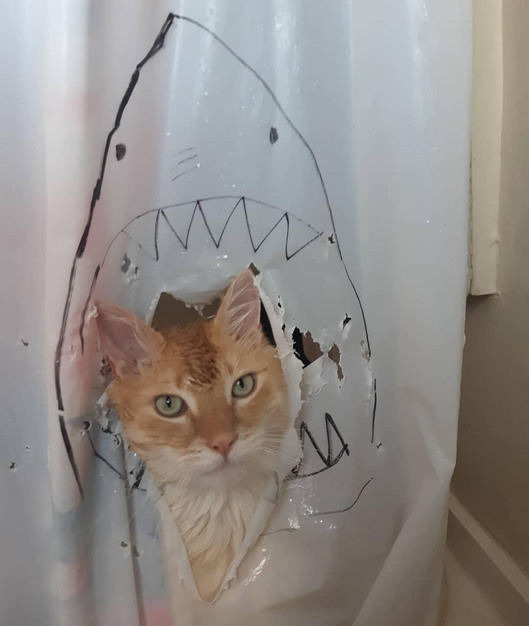 62540248 2471429599581180 2863044567796110004 n - Кот рвал шторки в ванной, и хозяйка решила это исправить — она начала дополнять дырки рисунками