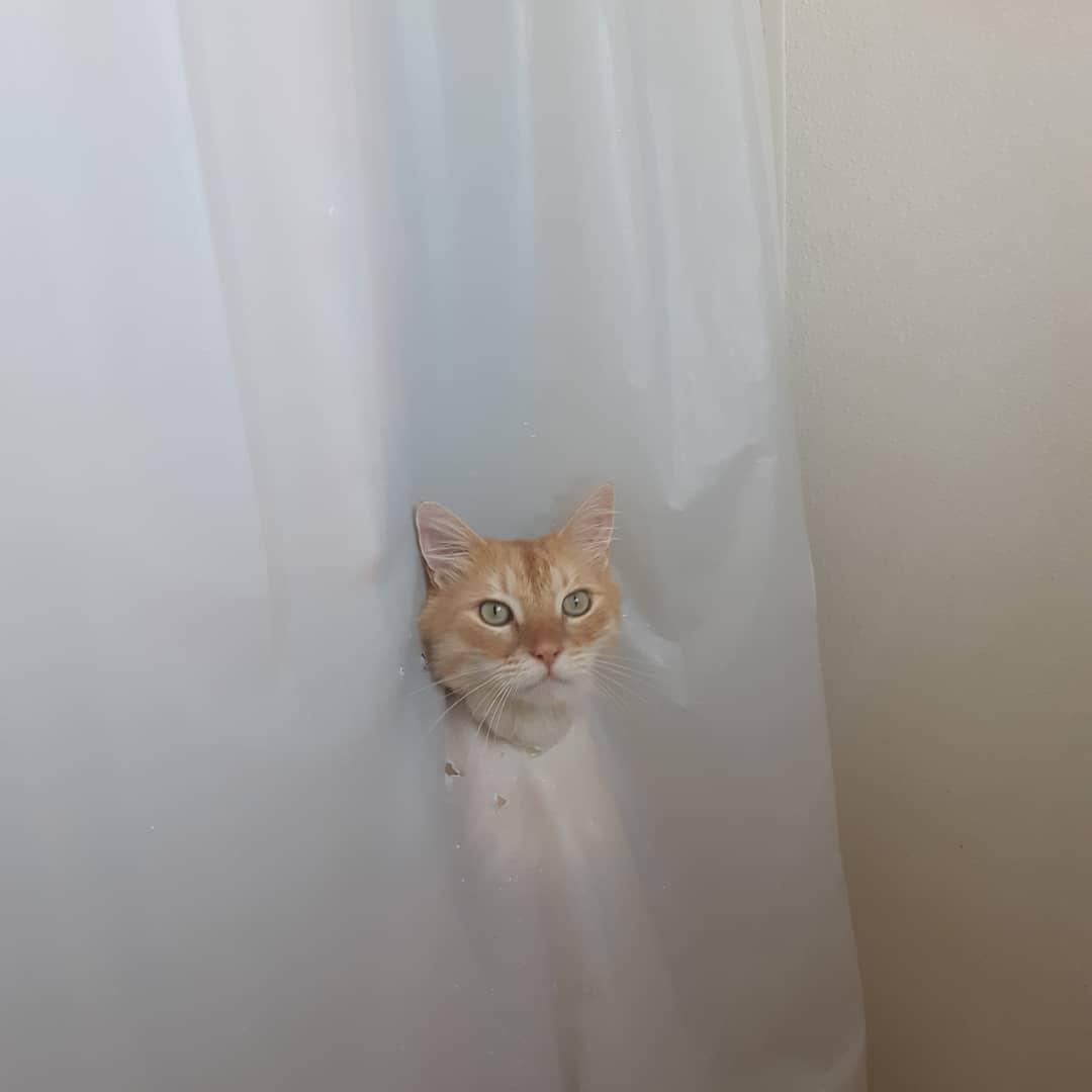 65300225 352756992064073 2320263363267284113 n - Кот рвал шторки в ванной, и хозяйка решила это исправить — она начала дополнять дырки рисунками
