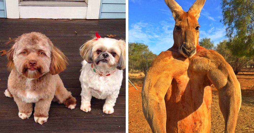 16 удивительных фотографий животных с явными человеческими чертами