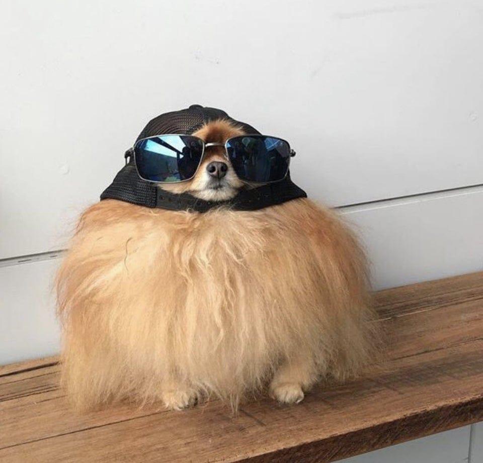 a0iz7ef7rrbxd bciqnppqtmnbbnvzxyllv pey9ola - Пёс в солнечных очках выглядел настолько круто, что попал в битву фотошоперов и стал ещё круче