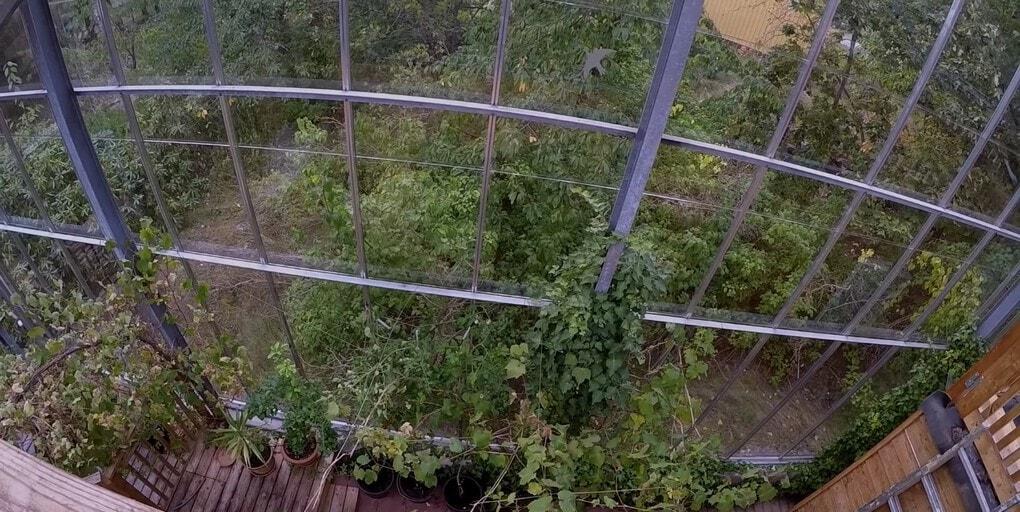 screenshot 6 - Шведская семья превратила свой дом в огромную теплицу, жизни в которой позавидуют не только помидоры