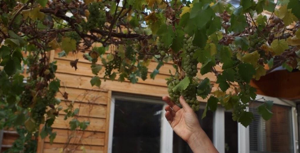 screenshot 7 - Шведская семья превратила свой дом в огромную теплицу, жизни в которой позавидуют не только помидоры