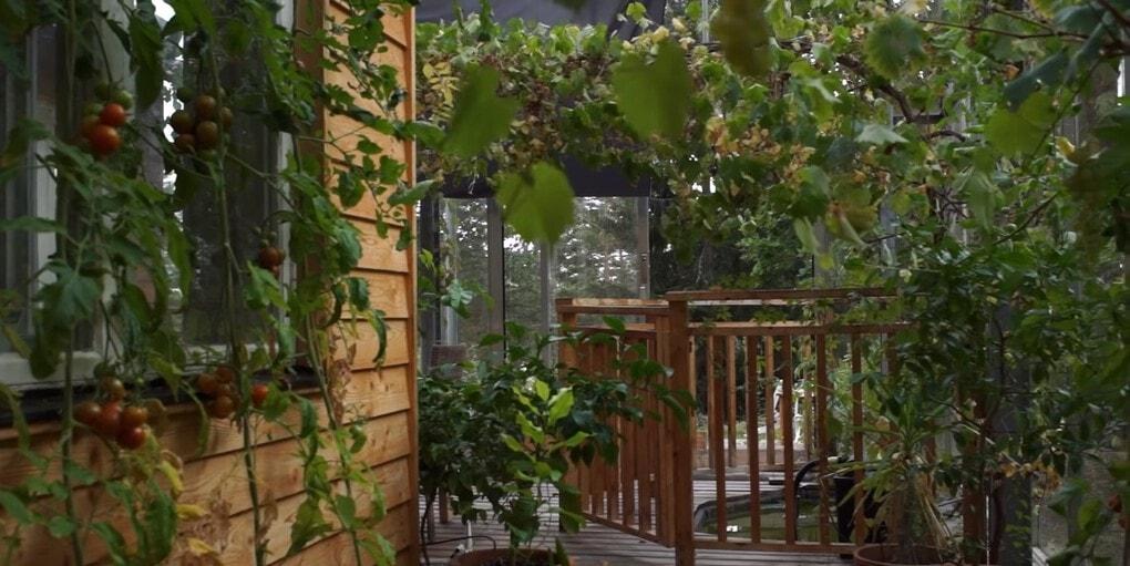 screenshot 8 - Шведская семья превратила свой дом в огромную теплицу, жизни в которой позавидуют не только помидоры