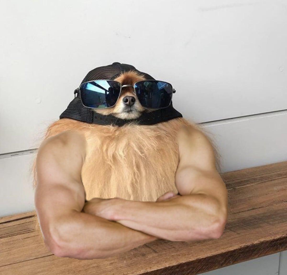 utzi3yb - Пёс в солнечных очках выглядел настолько круто, что попал в битву фотошоперов и стал ещё круче