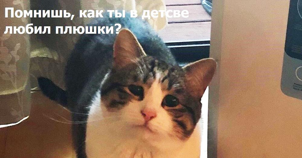 «Помнишь, как ты в детстве любил»: вгоняющее в тоску фото кошки стало мемом о ностальгии и прошлом