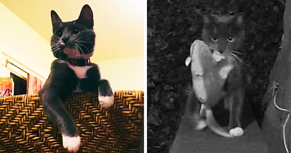 Кот приносил хозяину добычу, а тот был против. От кровавых даров спасли смекалочка и технологии