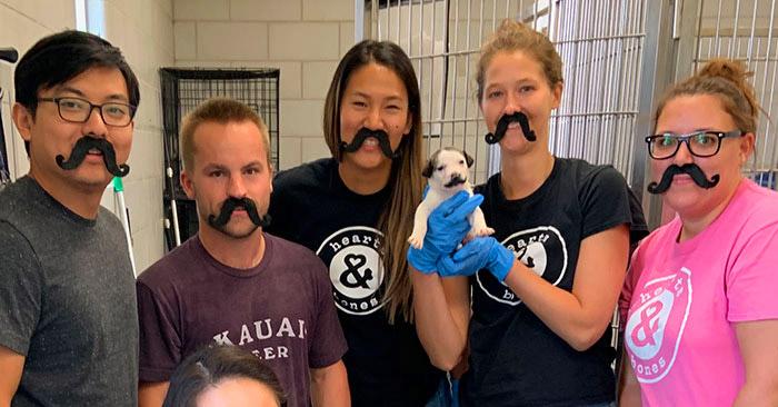 Этот щенок с уникальным окрасом из нью-йоркского приюта носит роскошные усы, а-ля Сальвадор Дали