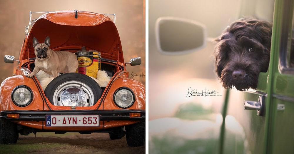 Фотограф из Бельгии снимает собак и винтажные автомобили. Получается очень органично!