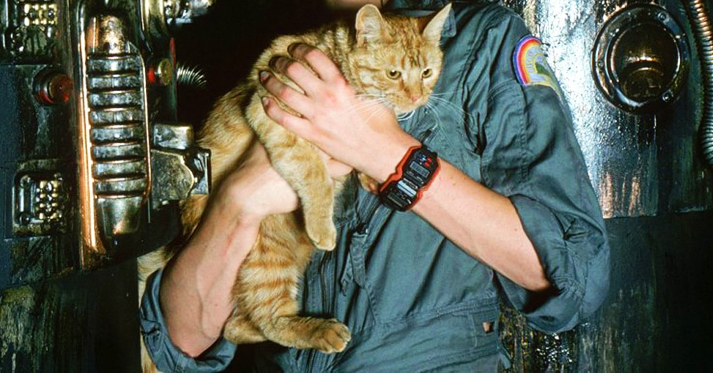 Тест: Сможете ли вы угадать фильм по котику?